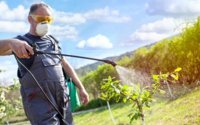 Is Gluten or Glyphosate to Blame for Our Declining Health?